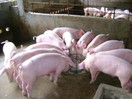 猪感冒一般分为3种