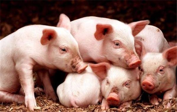 """我国猪价迎来""""三大冲击"""",下半年养猪户会不会亏到底"""